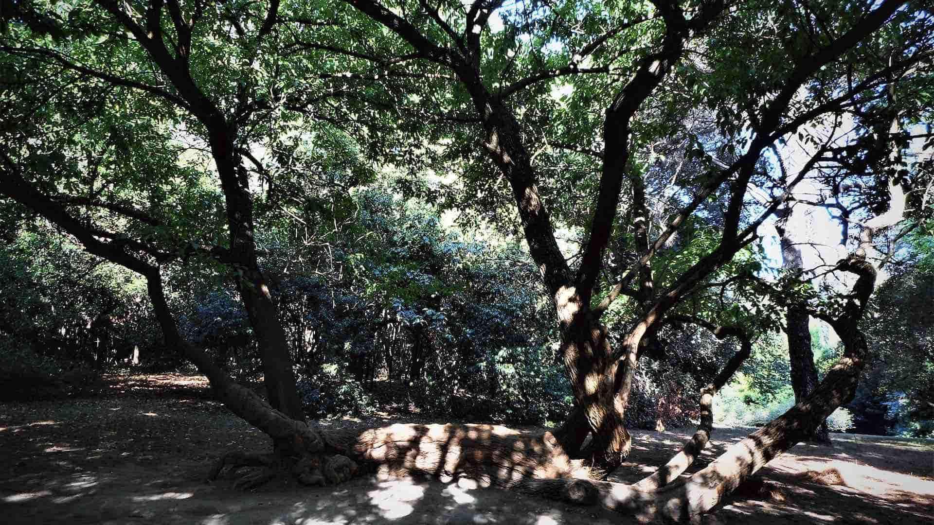 Giardino inglese nel Parco della Reggia di Caserta