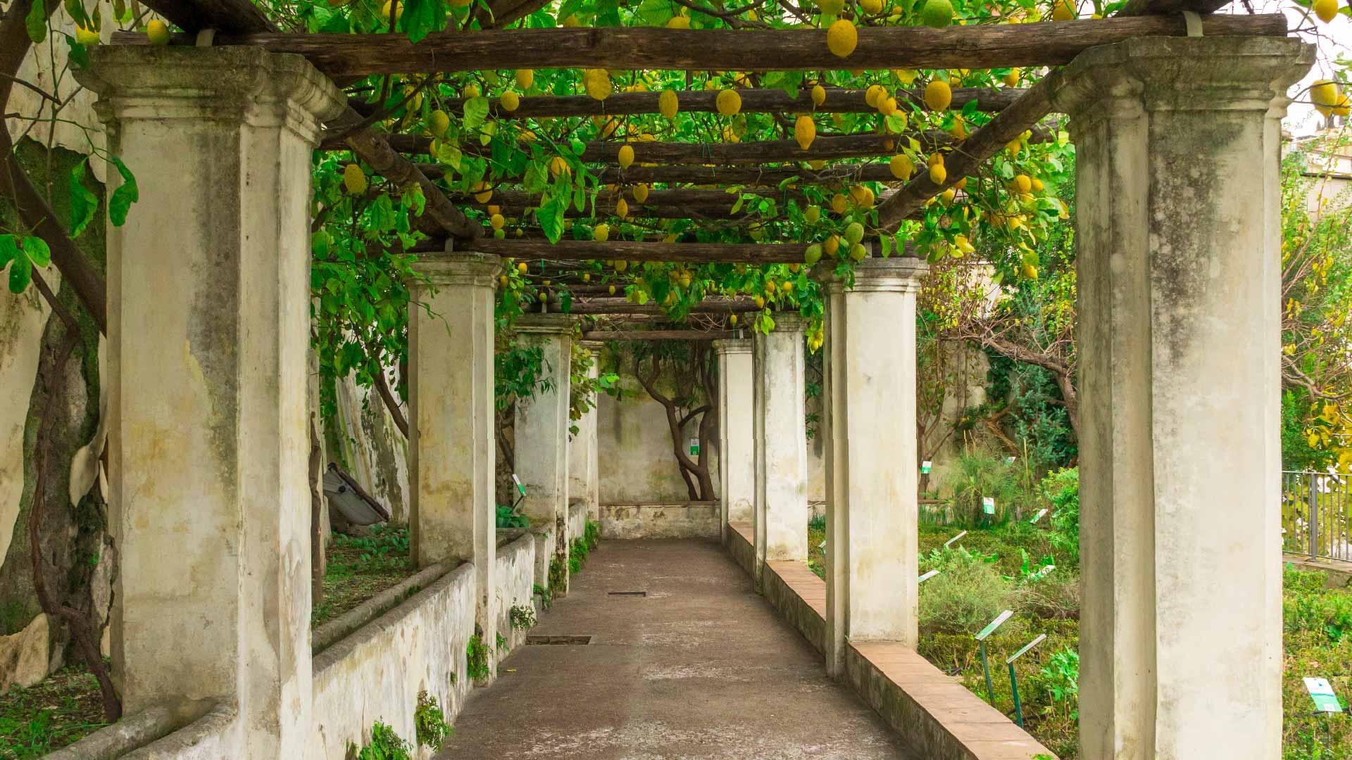 Orto Botanico di Salerno: Giardino della Minerva
