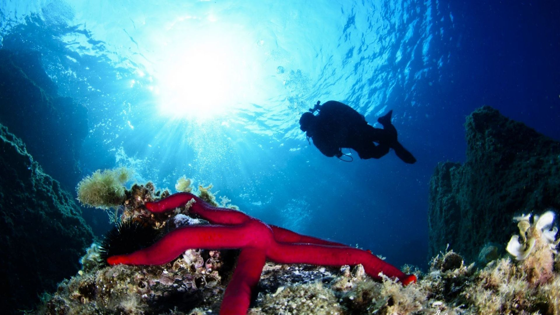 Immergiti nelle acque dell'isola d'Ischia