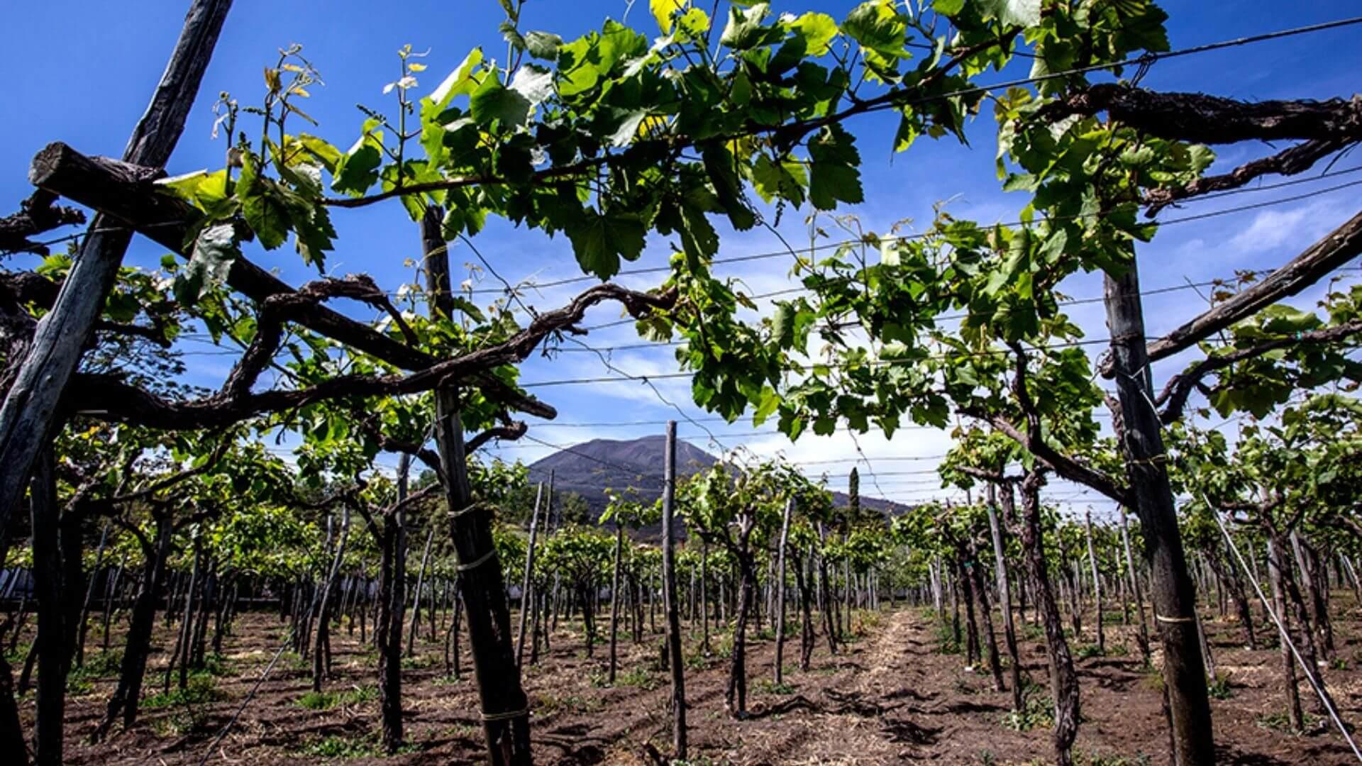 Cantina del Vesuvio Winery